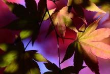 Fall / by Silvia Emma Ascari