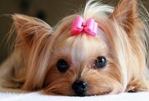 puppy love / by Nikki Fry