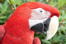 South America/Australia / Step Into The Wild at the Greater Vancouver Zoo and visit some of our fascinating zoo residents with an South American/Australian geographic origin! / by Greater Vancouver Zoo