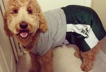 Furry Fans / Make sure all members of the family have their Bulls gear, including your pets! Does your pet have Bull Pride? Email us a photo at social@usf.edu for the chance to be featured on this board. / by University of South Florida