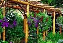 wedding garden / by Garden Girl