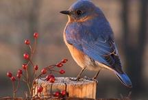 Birds / by Debbie Hoffman