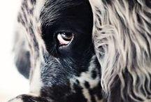 Animals / by Karina Garduño