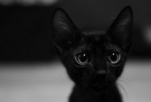 Black and White Things / by Pixie Copley - Photography & Art By Pixie