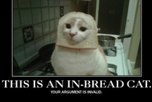 Cats and Bread - Breading Cats! / by Pixie Copley - Photography & Art By Pixie