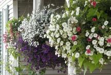 Yard & Garden Ideas / by Heather Sollid