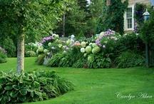 Landscaping/Gardening Ideas / by Kara Marvel