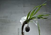 planting / by studioentropia