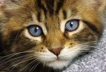 gatti♡猫♡chats♡cats / by Nicoletta Cappelletti