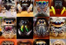 Arachnid / by Laura Peachey