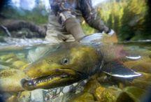 Fly Fishing Bucket List / by Zachary Pittman