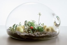 Wee Gardens / by Soltren Photography