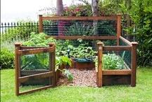 green garden grow / by Emily Beringer