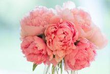 { flowers } / by Kristina Hin