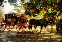Horse and Carriage / by Colonial Williamsburg