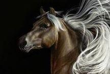 Animals: Horses / Beautiful Horses / by Rhonda Gillette
