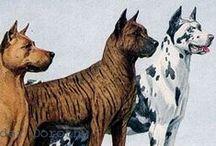Art: Dogs / by Rhonda Gillette