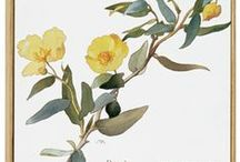 Mellow Yellow / The color yellow, celebrated for its vibrant hues, delights across the board, from nature's fruits and flowers to fashion and home decor. / by The Met Store
