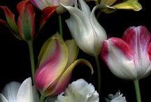 Flowers / by Daniel Carlsten