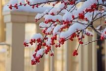 i miss snow / by Hannelore Field