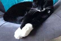 Bob's pals / Cats, cats, cats and more #cats! / by Blink London