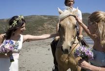 Weddings in Marin / by MarinVacation California