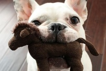 French Bulldogs / by Carmen