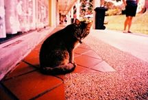 Lomography! (Holga's Diana's oh my!) / I am obsessed with lomo!!! / by Sarah Blakely