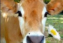 Cutest Animals! / by Debbie Snook