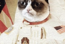 CATS / by Barbara Blair