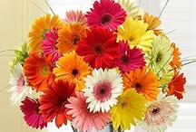 Colorful Flowers & Gifts / Animate your life with bright colored treats and flowers that are perfect for any occasion, from 1800flowers.com! / by 1-800-FLOWERS