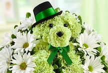 St. Patrick's Day Flowers & Gifts / St. Patrick's Day is March 17! Make your friends and family feel lucky with truly original St. Patrick's Day flowers and green treats from 1800flowers.com! / by 1-800-FLOWERS