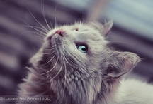 Cats / by Elspeth Rose