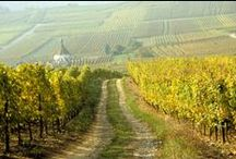 france wine country / wineries, vineyards in france and tips for visiting / by Robin | Melange Travel