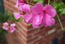 Gardens Flowers Plants / Great stuff - Gardens Flowers Plants  Social Media Philadelphia http://www.garrettconsultants.com Bob Garrett / by Bob Garrett