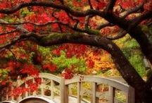 Autumn / Celebrate Autumn in all it's beauty / by Pay it forward