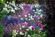 My purple Garden / by Joke van Dijk