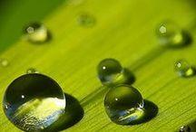Dew drops / by Joke van Dijk