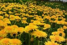 My yellow Garden / by Joke van Dijk