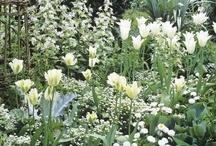 My white Garden / by Joke van Dijk