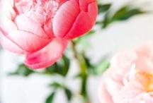 In the garden / how sweet is a rose / by Stefan Feiner