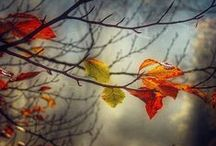 Fall ~ Harvest Time / by Kristin Emory