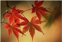 Fall in colors / Colors of fall / by Joke van Dijk