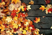 Fall: The best time of the year / by Stacia Elizabeth