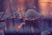 Winter Wonderland. / by Elizabeth