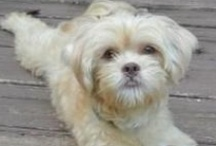 Our Fosters  / by Kirby the Dorkie