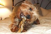 Commercial Food & Treats / These are the commercial dog foods and treats we have approved as being healthy and tasty. / by Kirby the Dorkie
