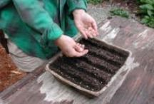 Seed Starting and Container Gardening / by Amy Blanchard