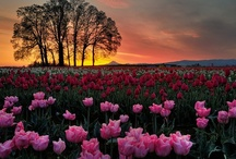 Photography / by Kim Germinaro