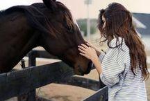 horse / by Hannah Stewart